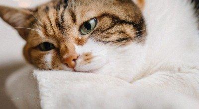 Wenn ein Freund stirbt: die Trauer einer Katze