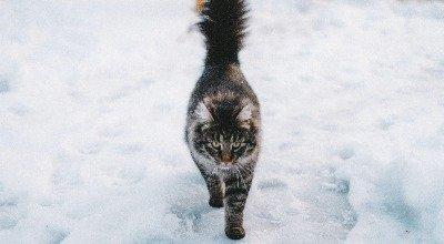 Katze im Winter: So schützen Sie Ihren Freigänger bei kalten Temperaturen