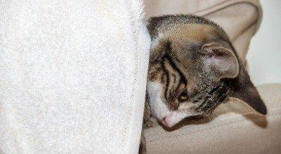 Wenn es der Katze schlecht geht: Die häufigsten Katzenkrankheiten