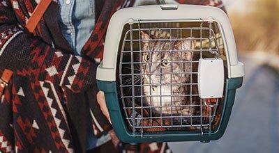 So kann der Katzentransport stressfrei gelingen