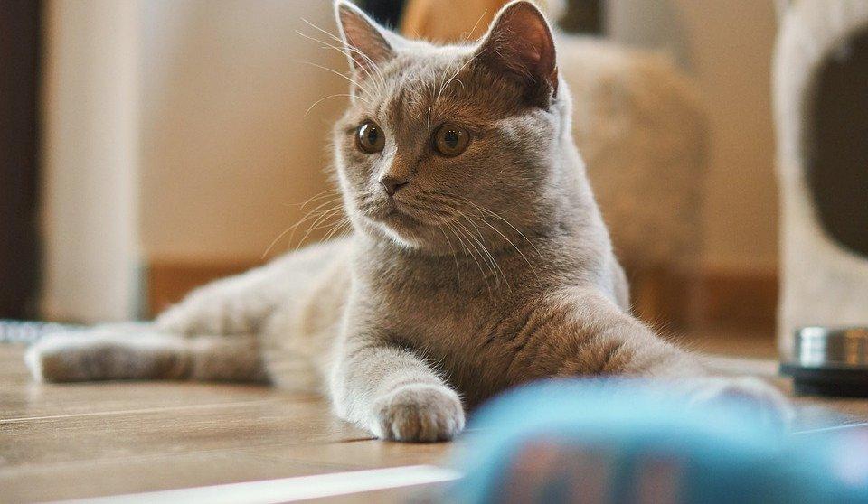 Clickertraining mit Katze: Lassen sich die kleinen Tiger erziehen?