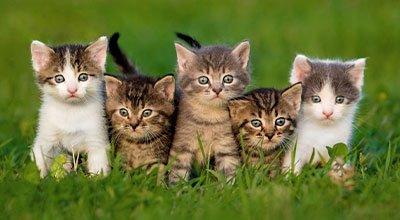 Katzenbabys und der Einzug in ihr Zuhause