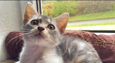 Das richtige Kittenfutter für ein gesundes Wachstum Ihrer Katze