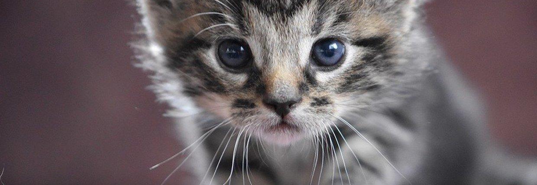 Reichhaltiges Kittenfutter von JOSERA