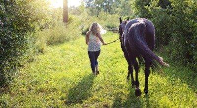 Mash: leicht verdaulich und wohltuend für Pferde