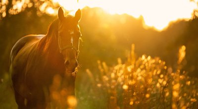 Coronavirus: Was Sie als Pferdebesitzer und Reiter beachten müssen?