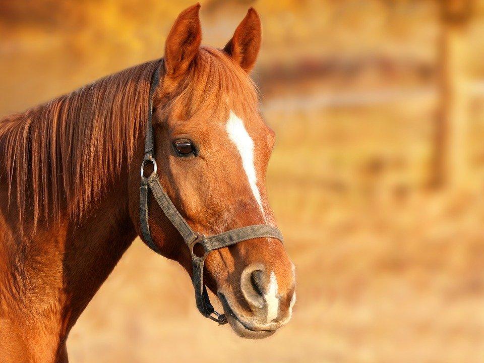 Leicht verdaulich - Mash Pferdefutter