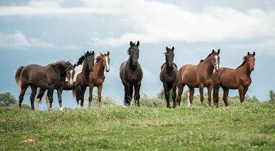 Pferde kaufen – Der Traum vom eigenen Pferd