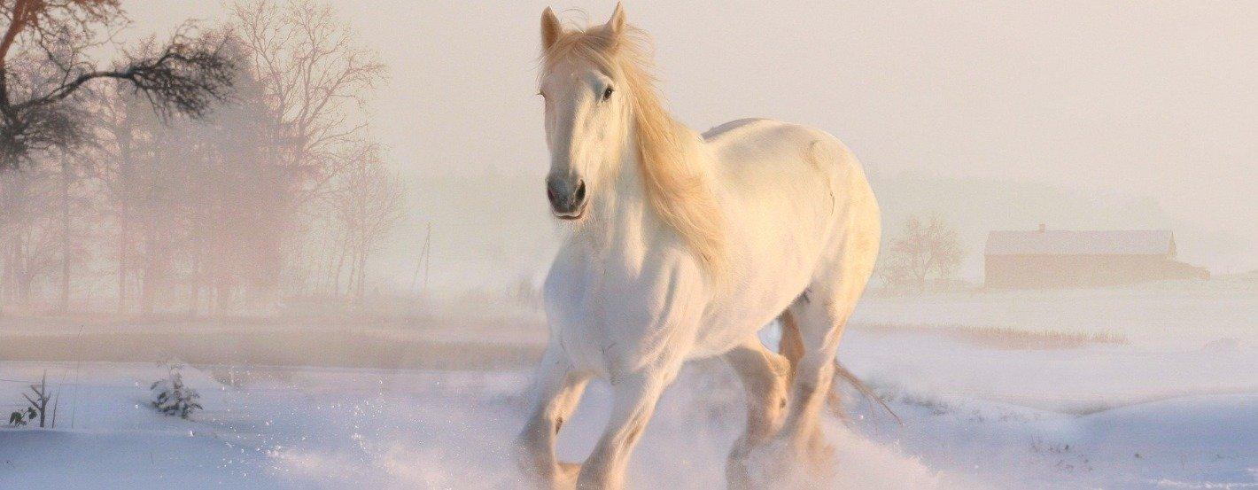 Pferde im Winter - fit und gesund durch die kalte Jahreszeit