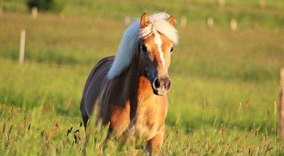 Premium Pferdefutter für Ihr Pferd