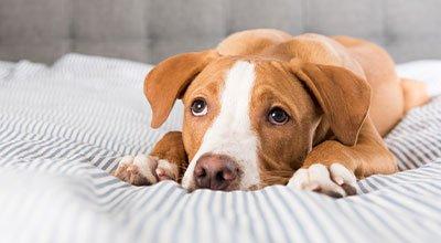 Reizdarmsyndrom beim Hund - Ursachen & Hilfe