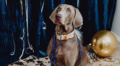 Silvester mit Hund: Stress verhindern und Nerven beruhigen
