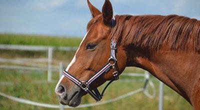 Fütterungsbedingte Stoffwechselstörungen bei Pferden