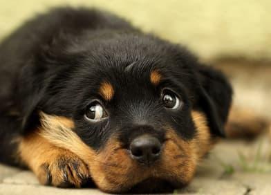 Zahnwechsel Beim Hund Infos Tipps Hilfe Fur Ihren Vierbeiner