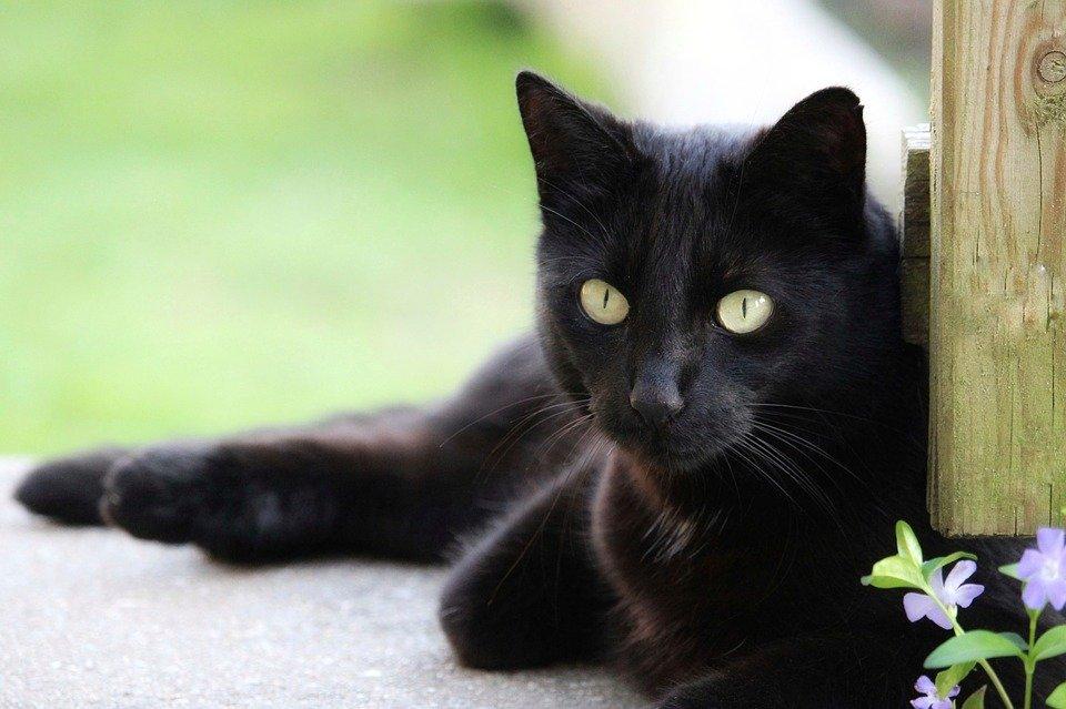 katze-schwarz-mit-blume