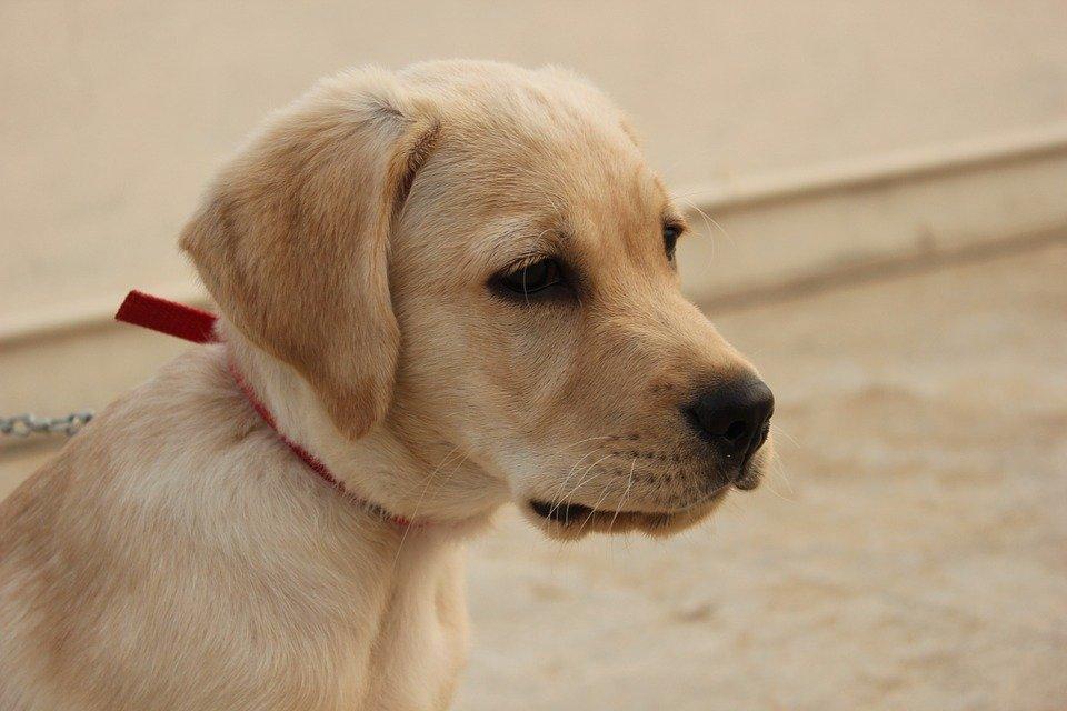hund-mit-halsband