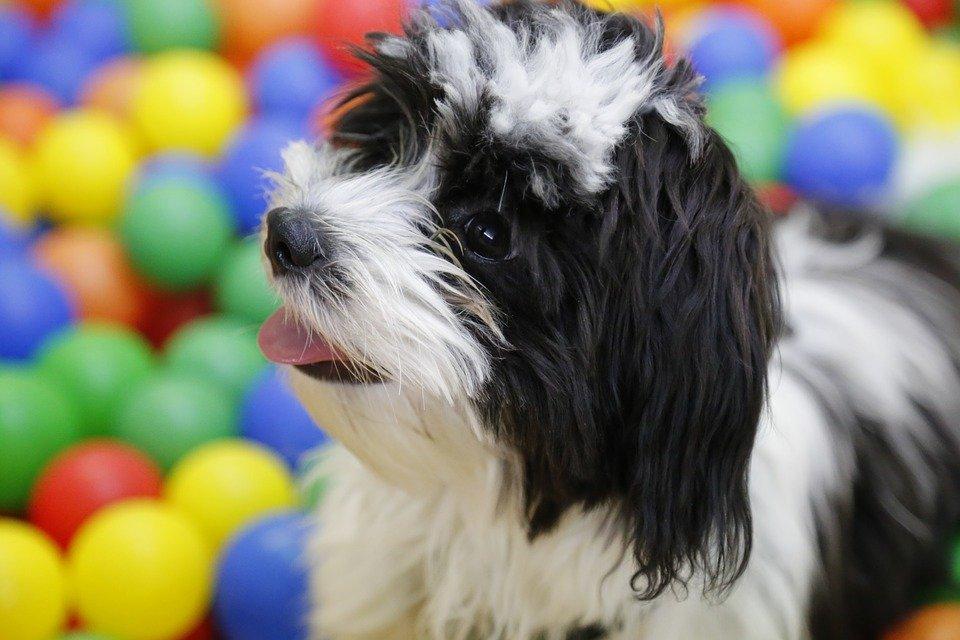 hund-im-bällebad
