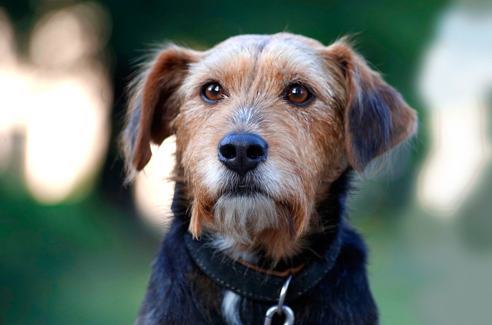 hund-mit-leine