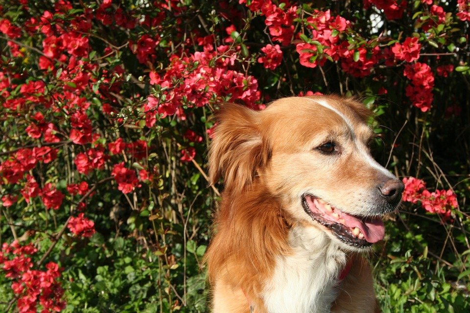 hund-vor-blumen