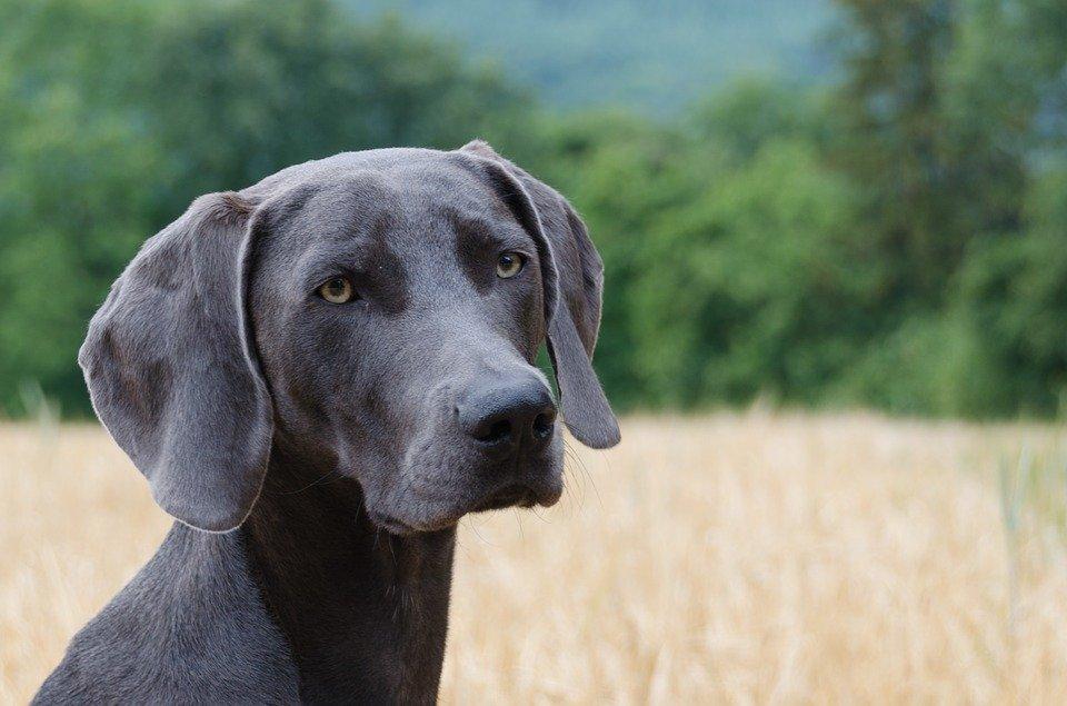 Hund im Feld