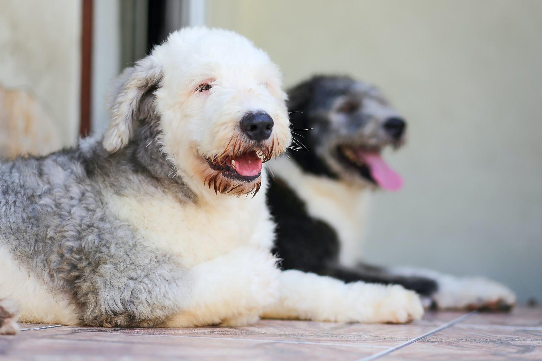 Zwei Hunde liegen nebeneinander