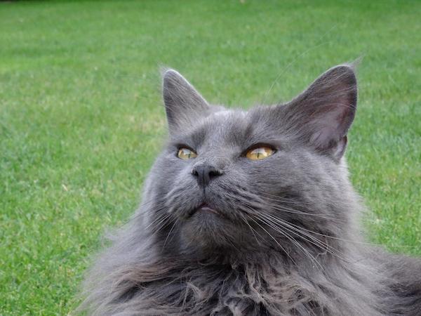 Katze sitzt auf einer Wiese.