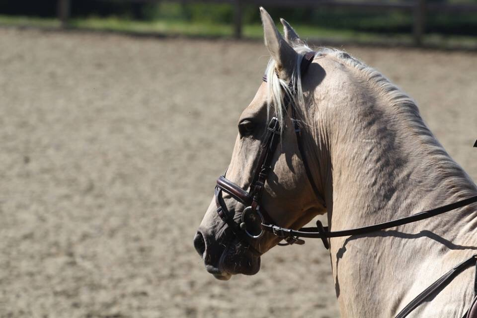 Mineralfutter ist sehr wichtig für Ihr Pferd