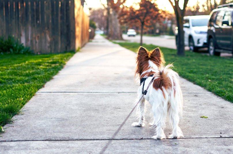 Hund-Gassigehen