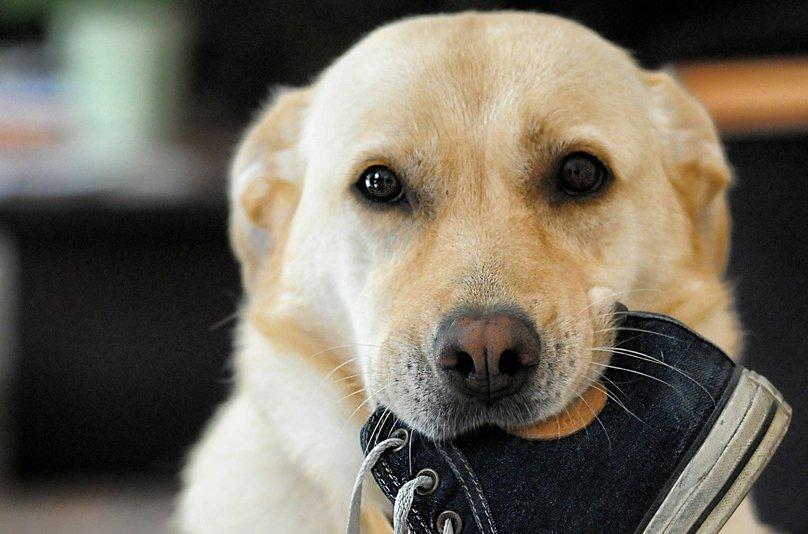 hund-hilft-im-haushalt