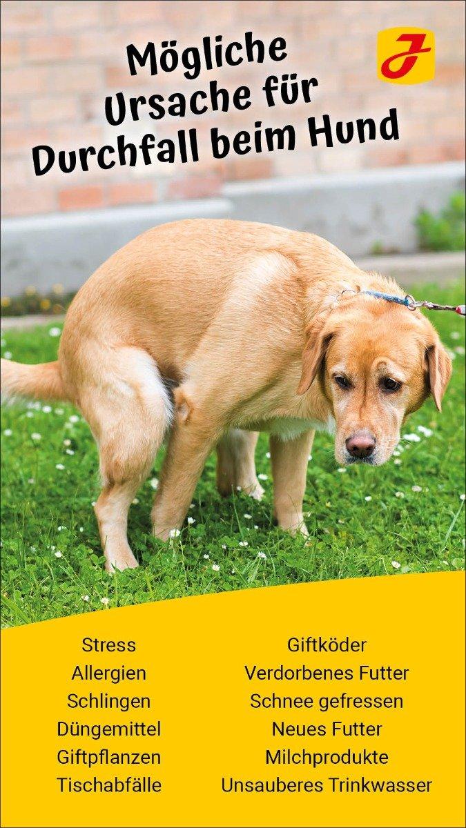 Durchfall bei Hund Ursachen, Tipps & Hausmittel