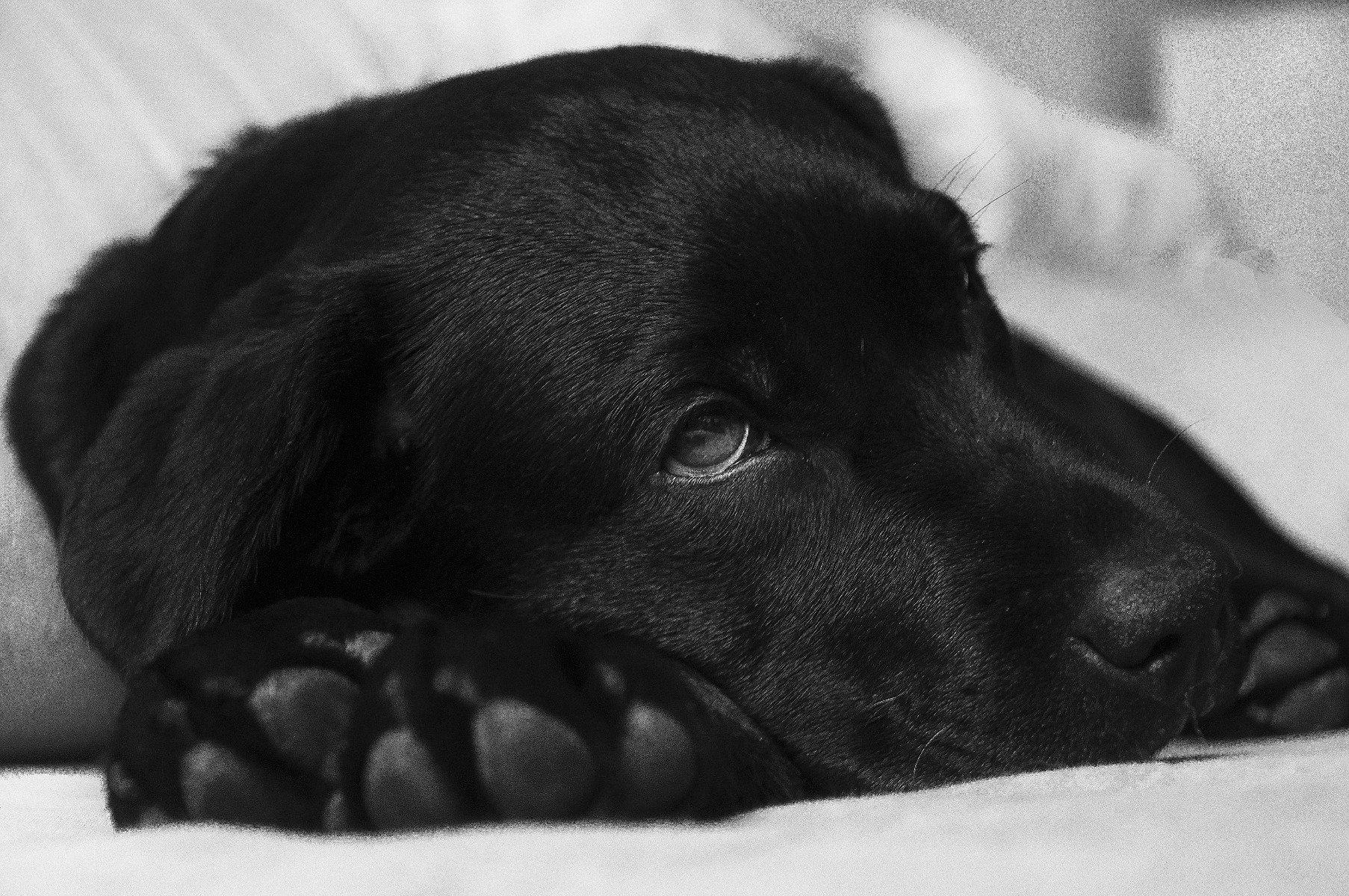 Durchfall beim Hund - ein Symptom