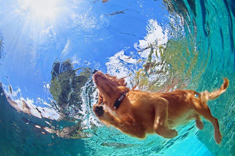 Hund von unten im Wasser beim Schwimmen