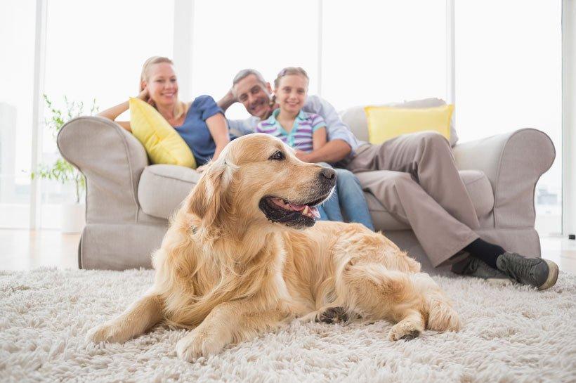 Familienhunde – welche Rassen?