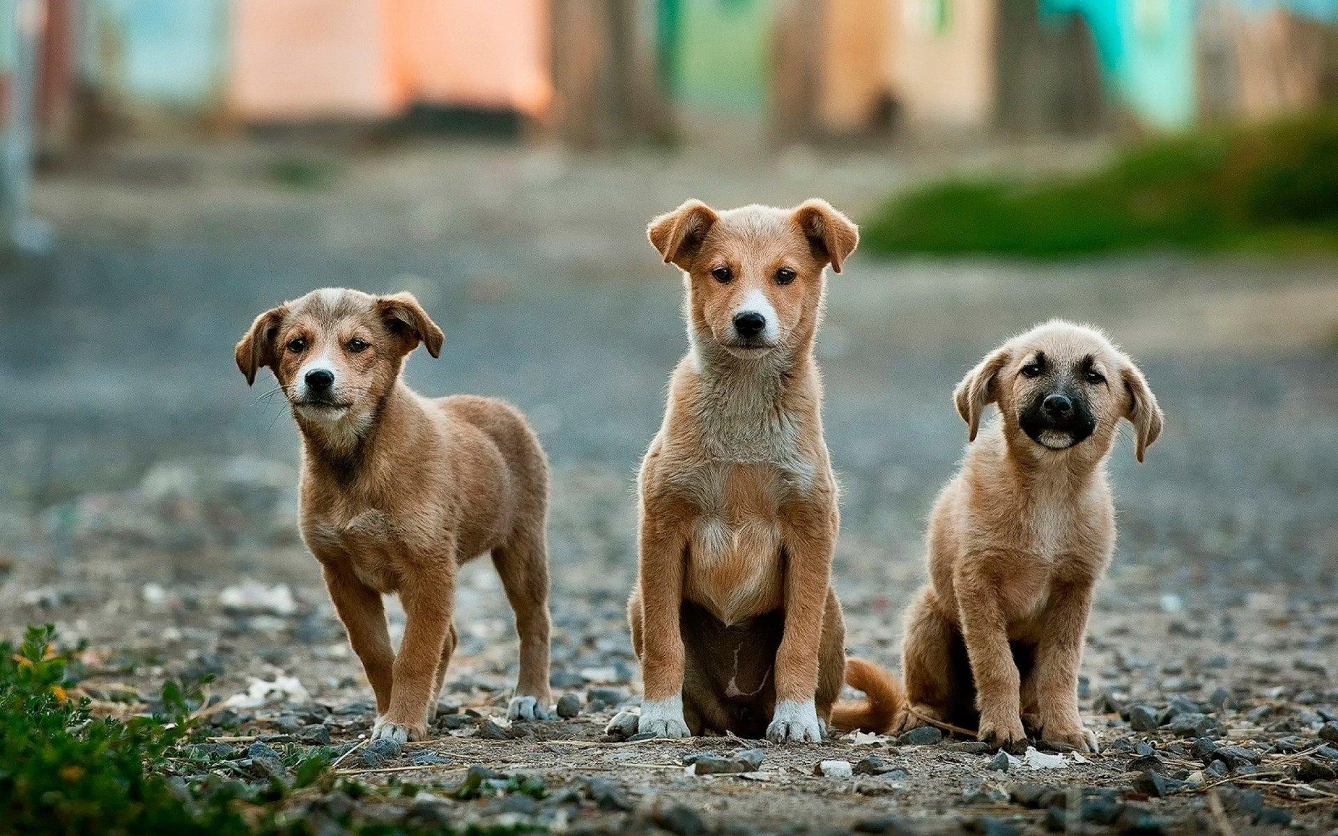 Hund Kaufen Das Sollten Sie Unbedingt Beachten