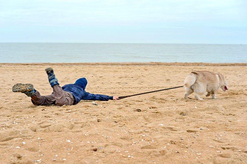 liegende Person wird am Strand von Hund an Leine gezogen