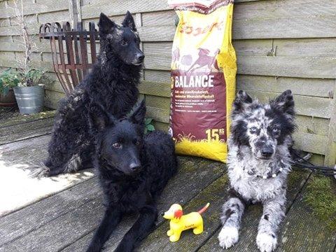 Hunde mit Josera Balance Trockenfutter