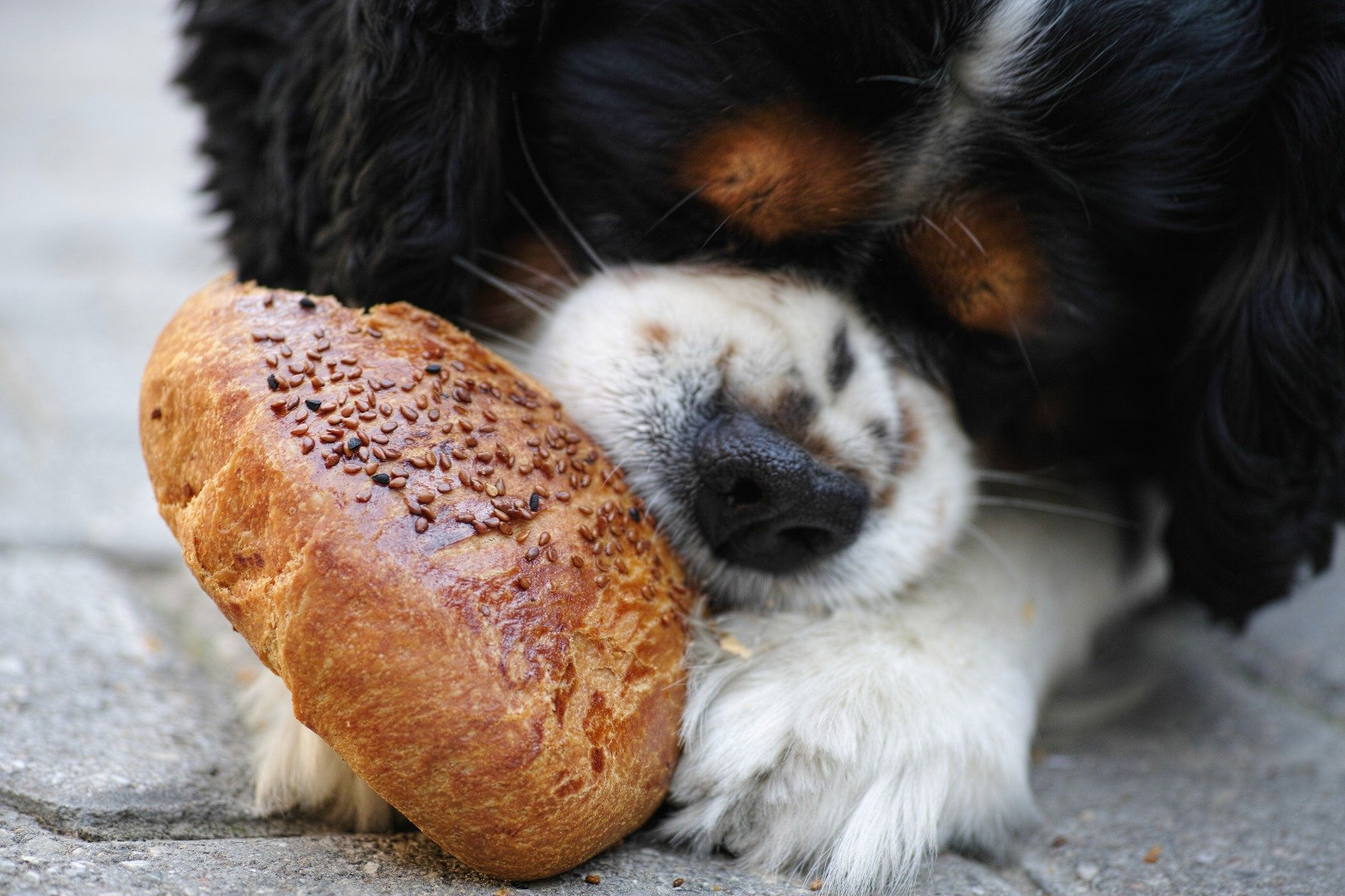 Hund frisst Brötchen