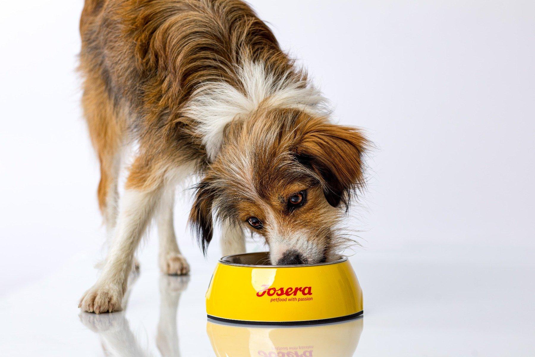 Hund mit Josera-Napf