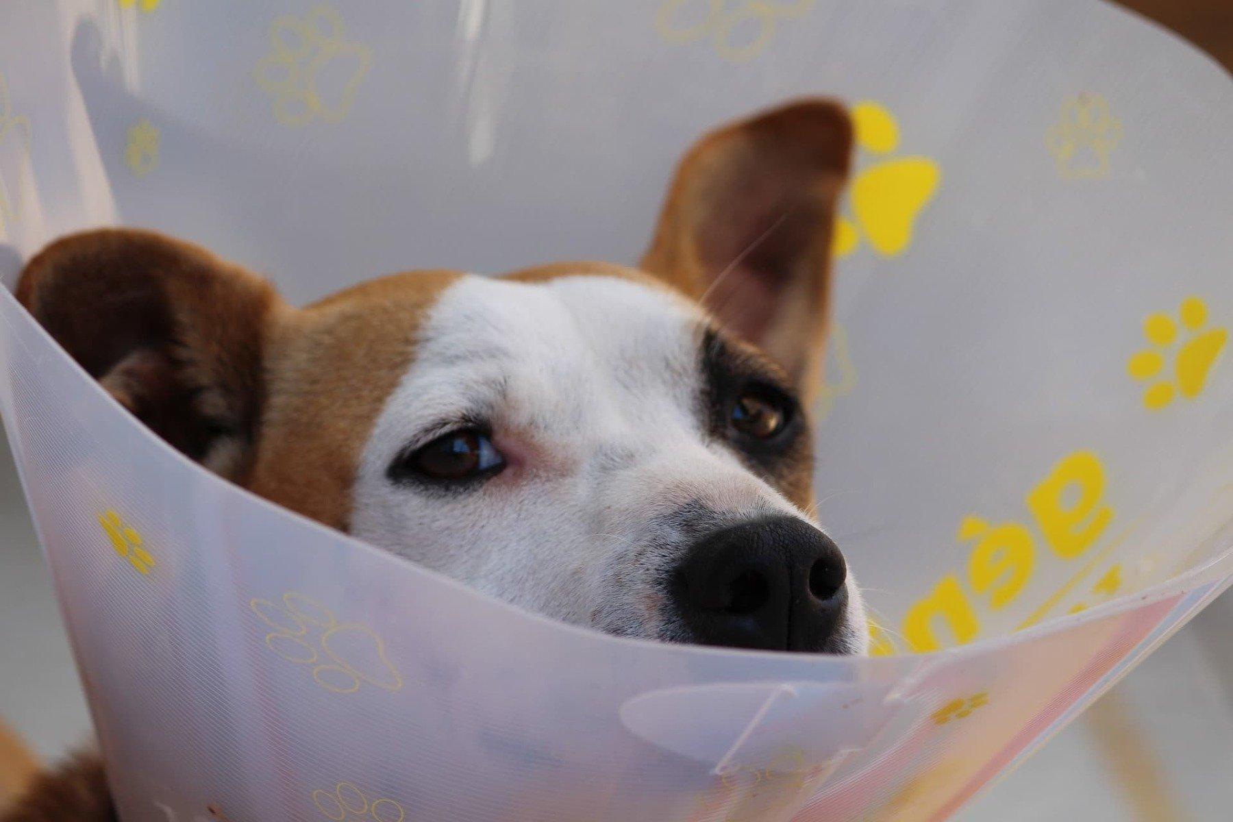 ohrenentzündung halskrause hund