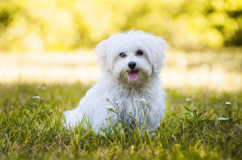 Geeignet hunde für allergiker Welche Hunde