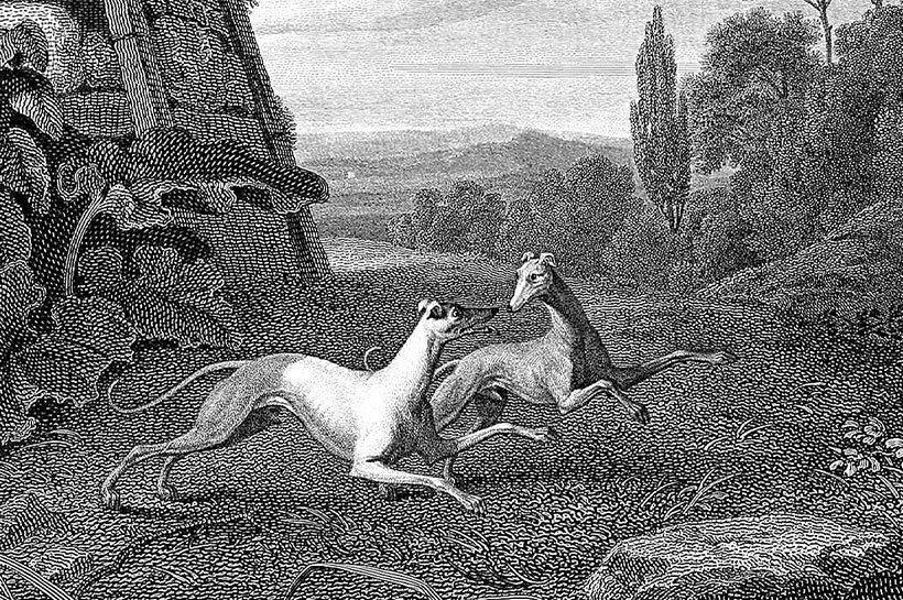 Historische Zeichnung von spielenden Greyhounds