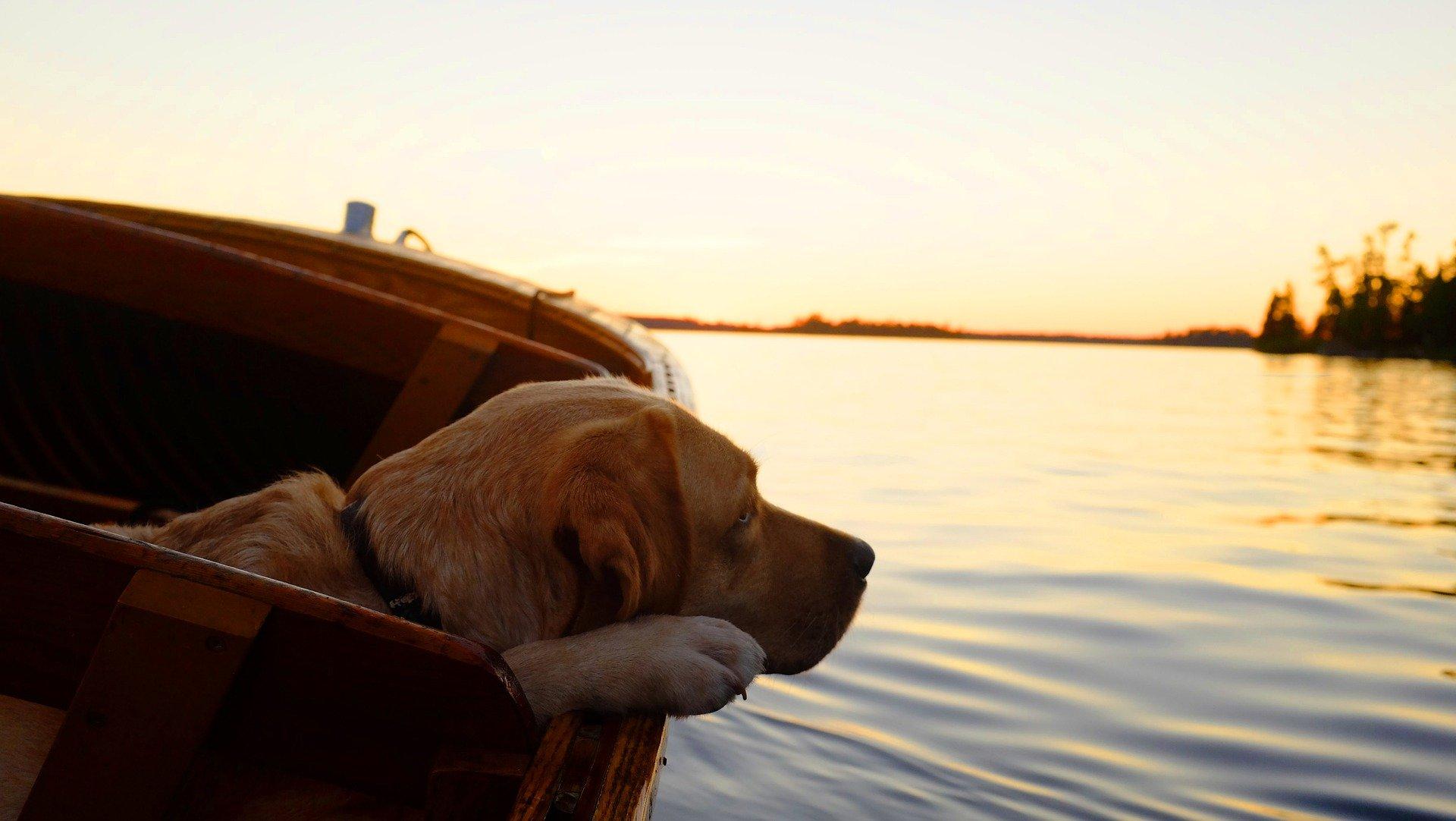 Labrador liebt Wasser