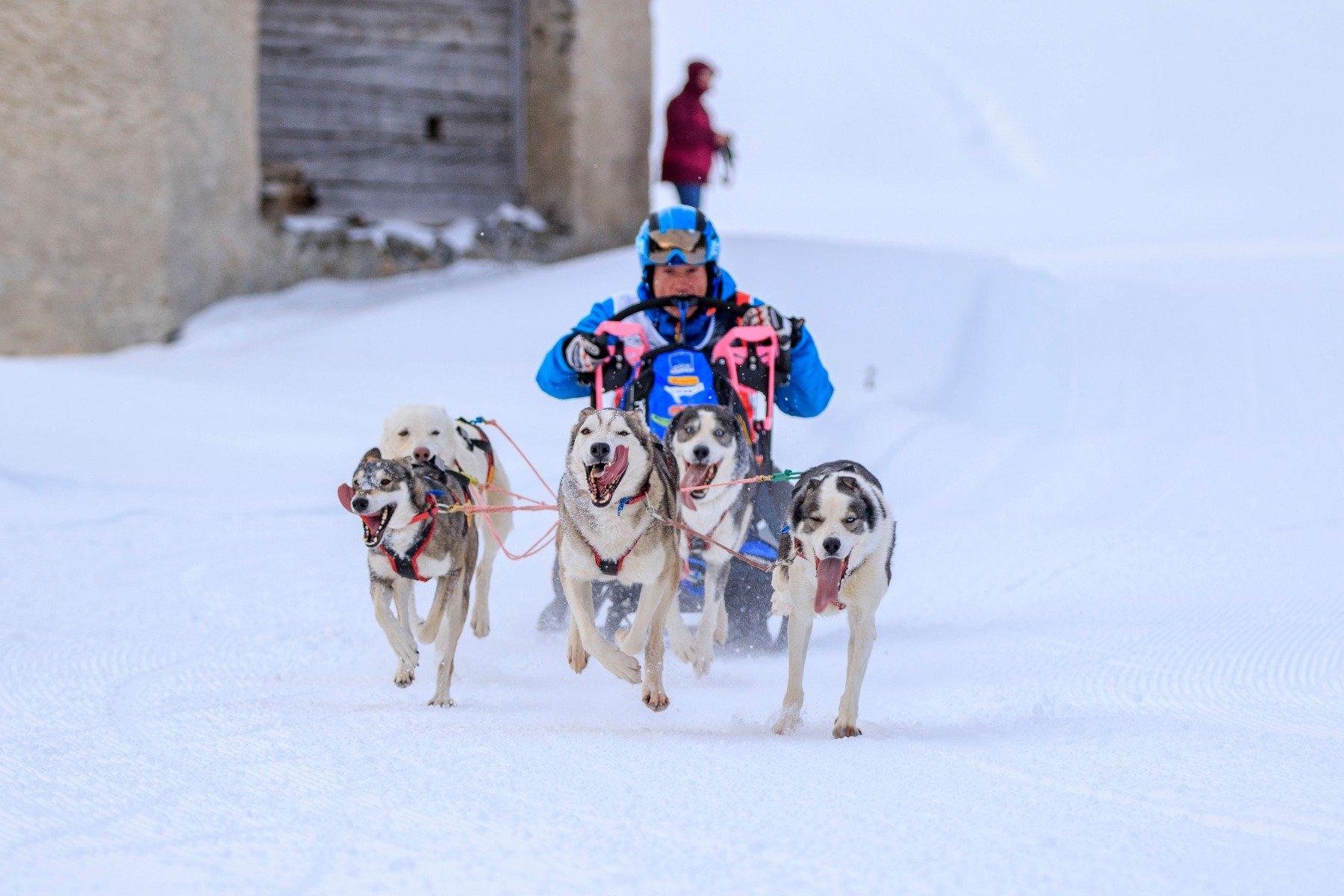 5 Schlittenhunde rennen mit Hundeschlitten und Roland Sum durch Schneelandschaft