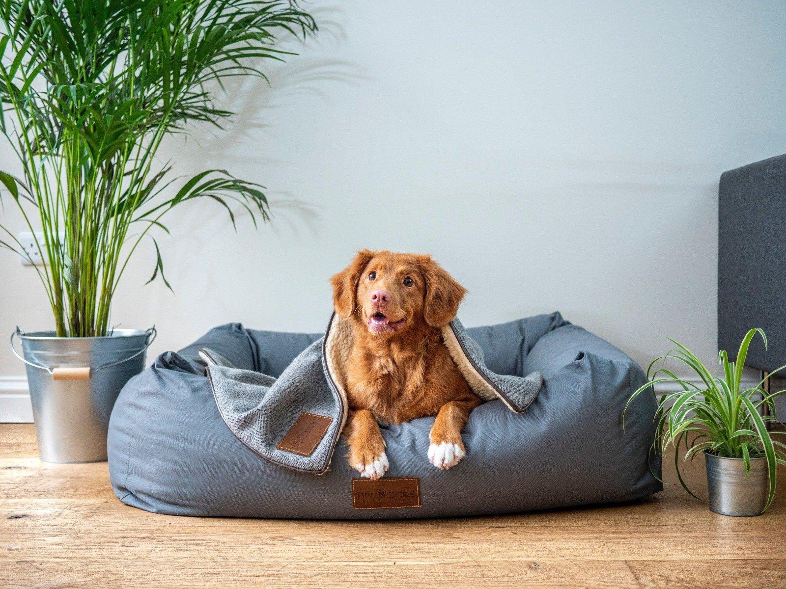 Brauner Hund liegt im Körbchen mit Decke zugedeckt