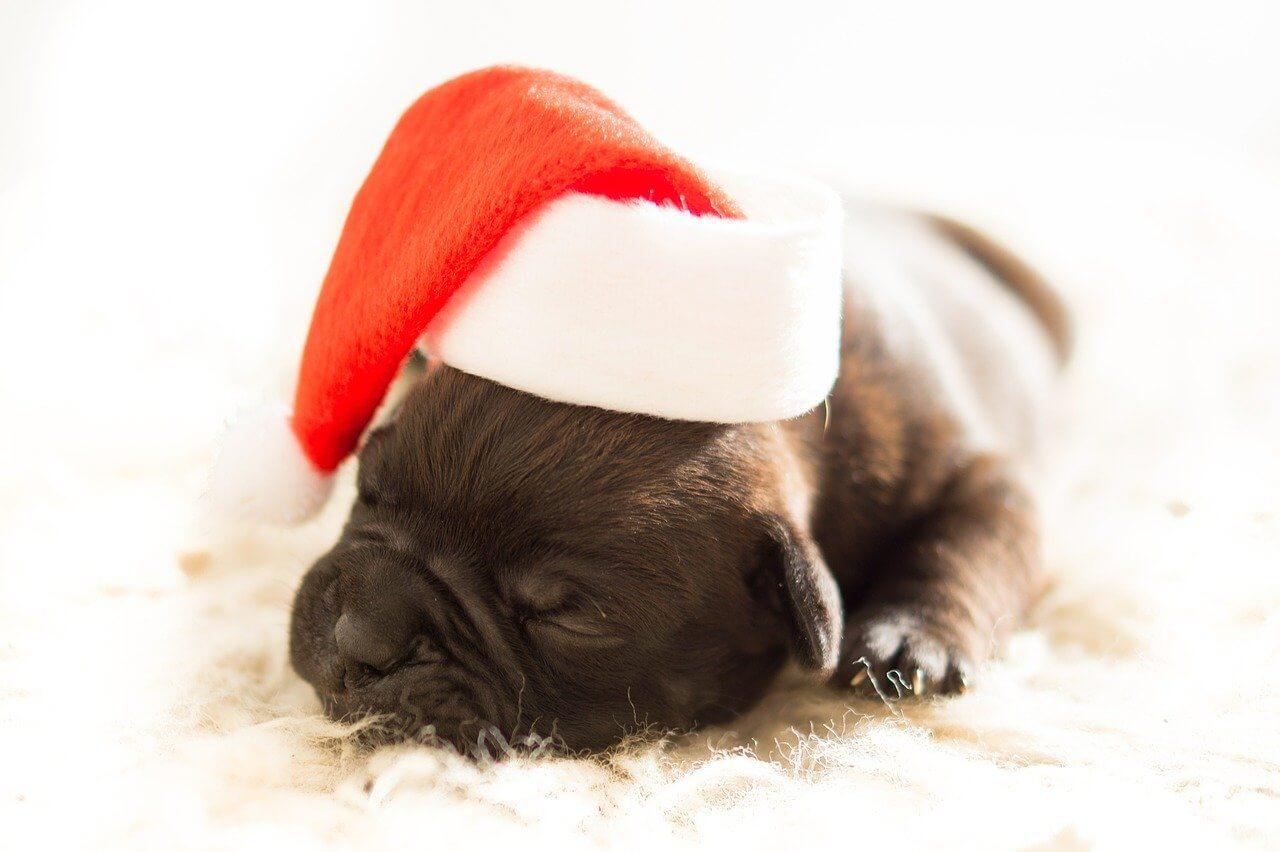 Schlafender Welpe mit Weihnachtsmütze auf dem Kopf