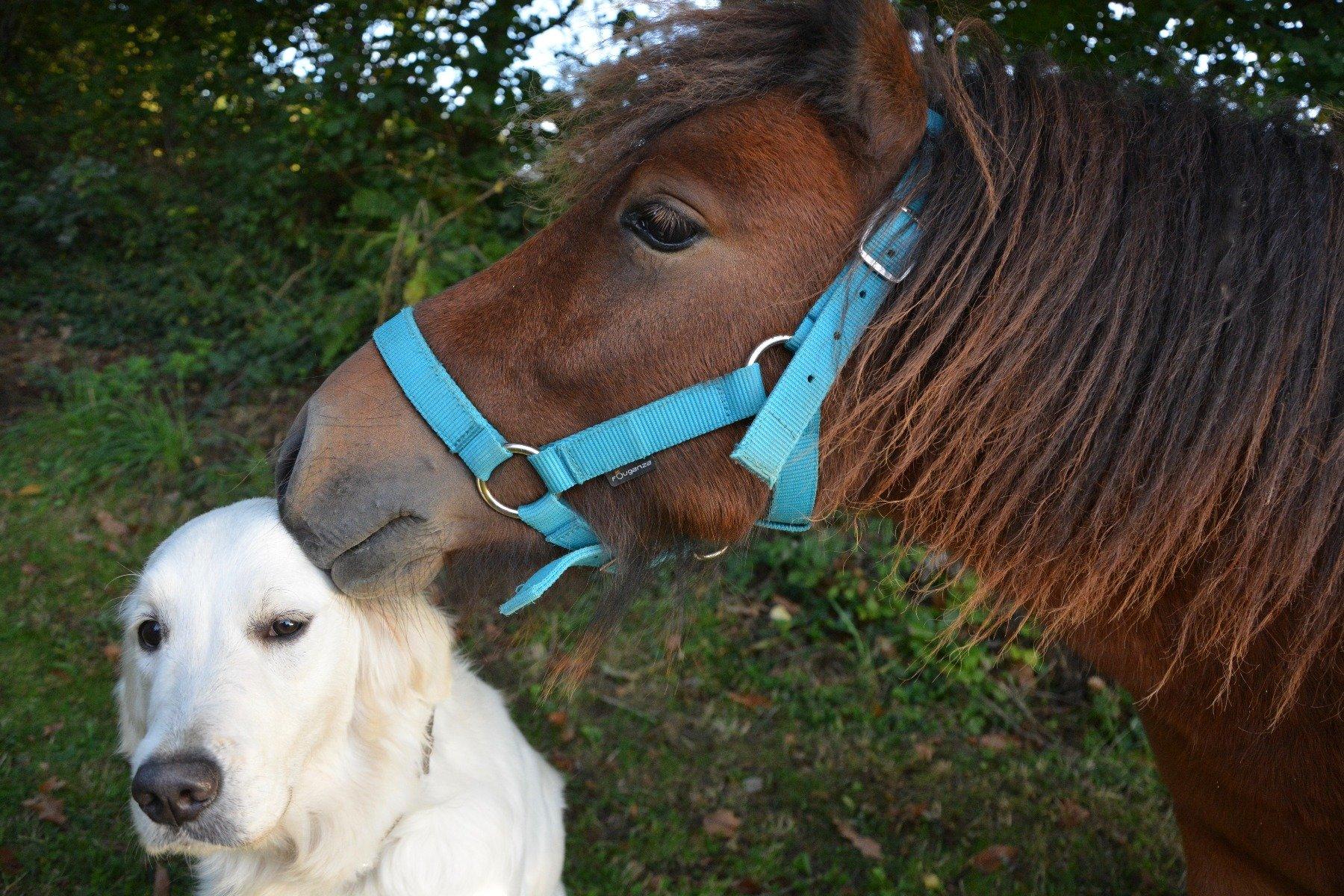 Hunde und Pferde - Entwurmung