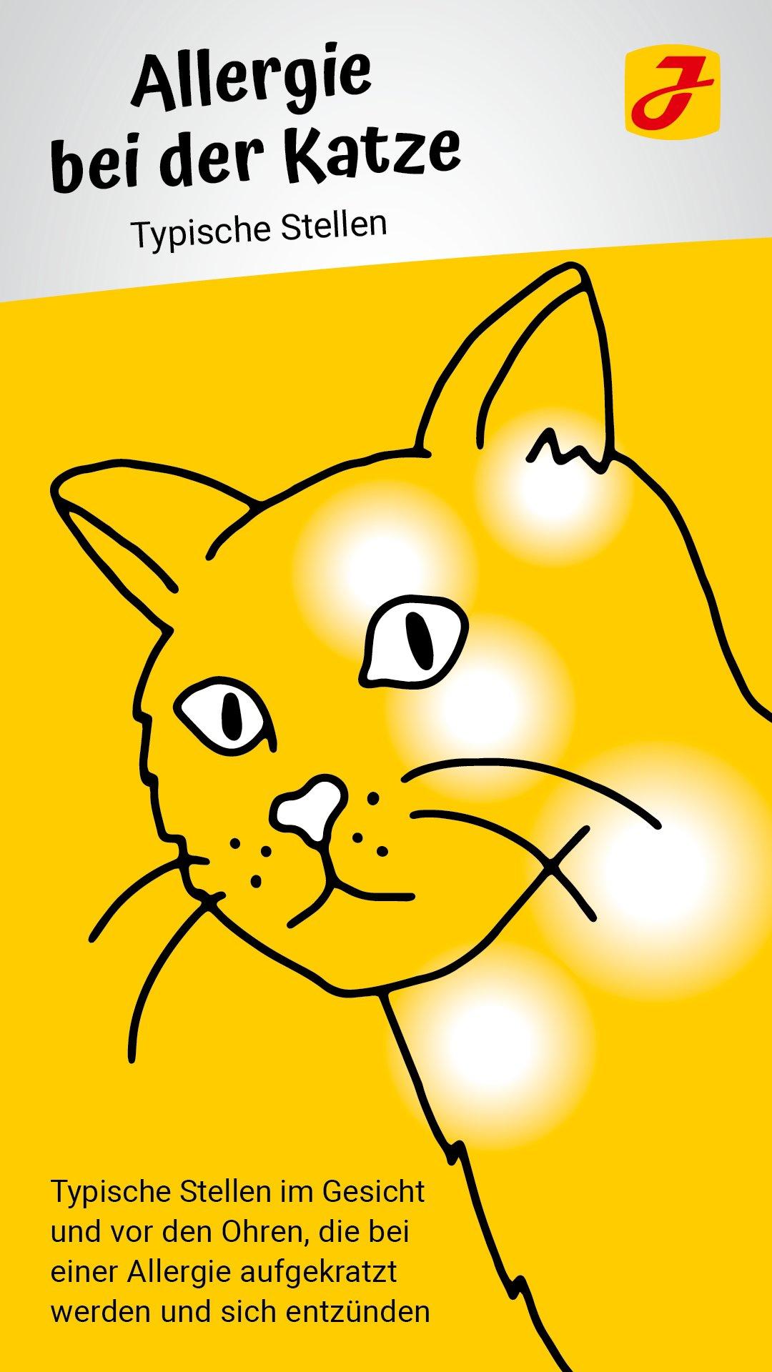 Katzen kaufen allergiker anti Katzenallergie: Katzenrassen