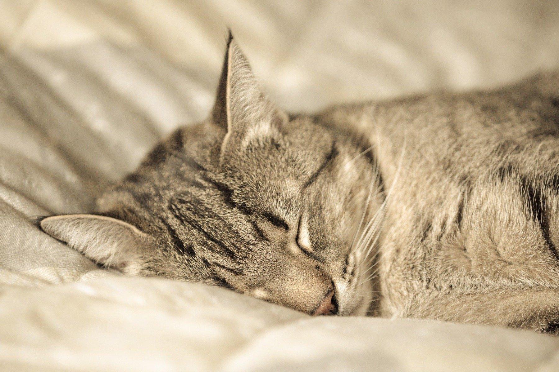 Getigerte Katze schläft auf einer Decke.
