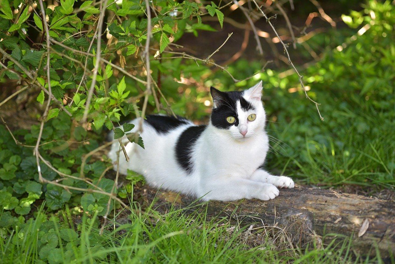 Junge schwarz-weiße Katze liegt auch einem Stück Holz im Grünen