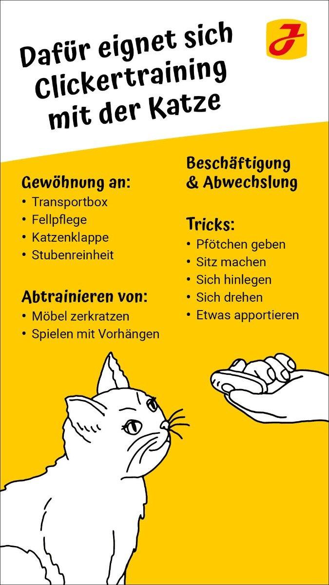 ☆ Clickertraining ☆ mit der Katze Tipps & Regeln fürs Klickern ✓